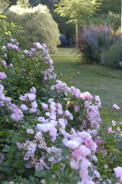 Eric lequertier cr ation de jardin anglais saint malo for Conception jardin anglais