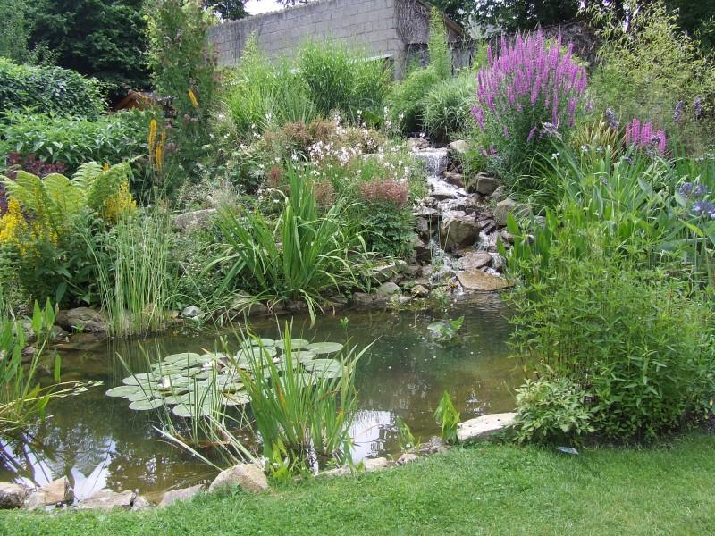 Jardin Aquatique Piscine Naturelle Images